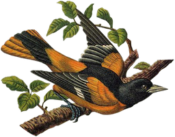 Victorian bird 13_quaddles by quaddles