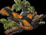 Victorian bird 13_quaddles