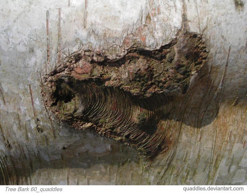 Tree Bark 60_quaddles