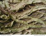 Tree Bark 61_quaddles