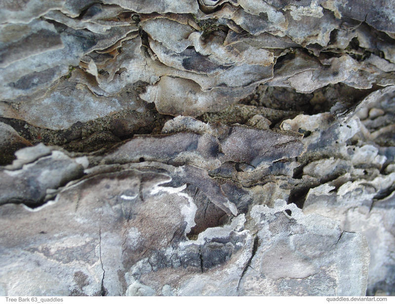 Tree Bark 63_quaddles by quaddles