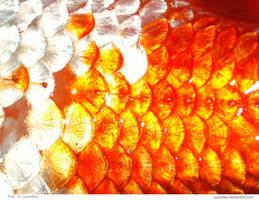 Fish  14_quaddles by quaddles