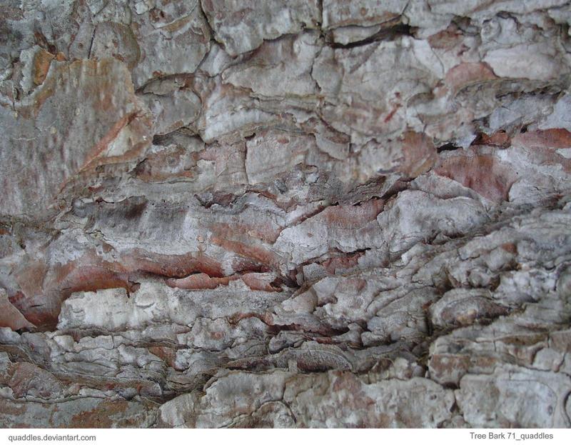 Tree Bark 71_quaddles by quaddles