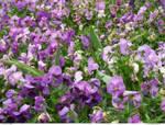 FLOWERS 70_quaddles