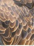 Eagle 19_quaddles