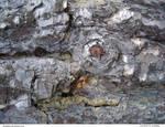 Tree Bark 93_quaddles by quaddles