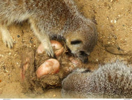 Animals 28_quaddles