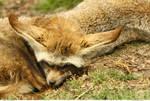 Animals 121_quaddles