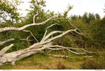Trees 18_quaddles