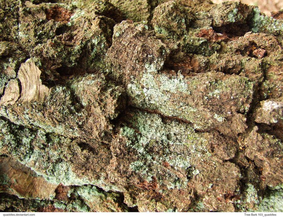 Tree Bark 106_quaddles