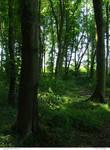 Trees 09_quaddles