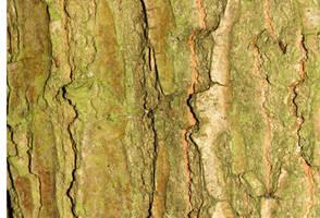 Tree Bark 111_quaddles by quaddles