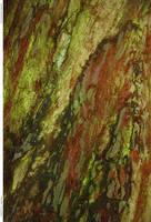 Tree Bark 116_quaddles by quaddles