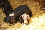 Animals 123_quaddles
