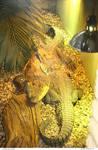 Animals 184_quaddles