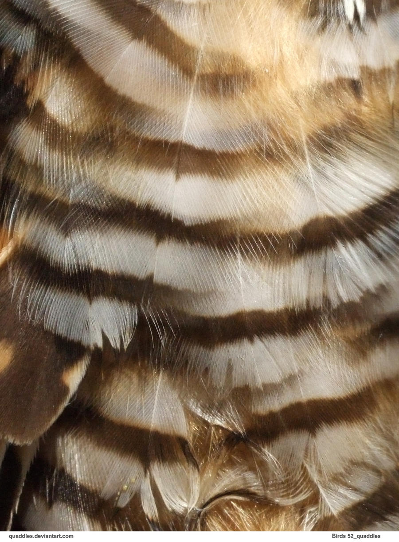 Birds 52_quaddles by quaddles