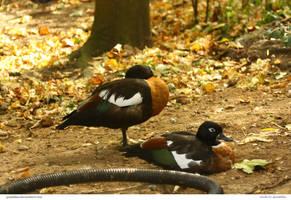 Birds 82_quaddles