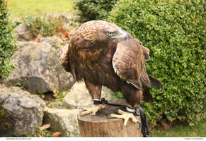 Eagle 59_quaddles