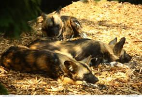 Animals 178_quaddles