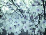 TEXTURE Blossom BLUE_quaddles