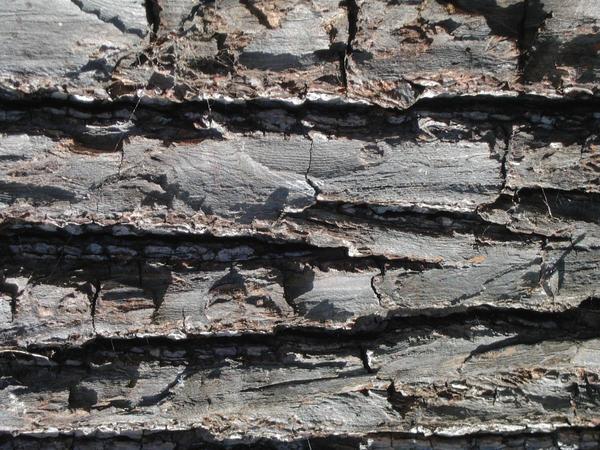 TEXTURE Tree Bark 11_quaddles
