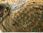 Birds 45_quaddles