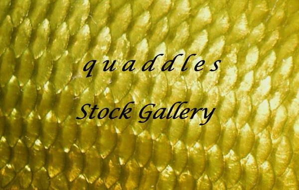 quaddles's Profile Picture