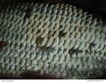 Fish 04_quaddles by quaddles