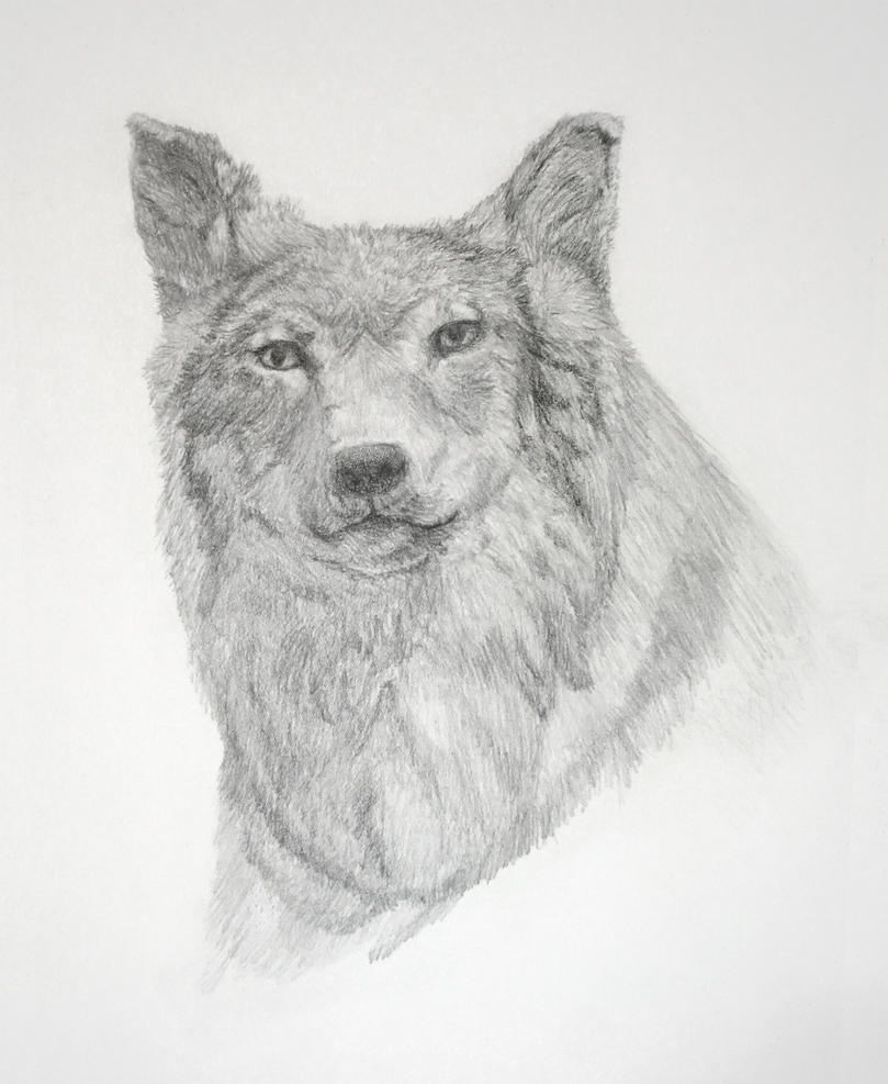 Wolf drawing by fayeana