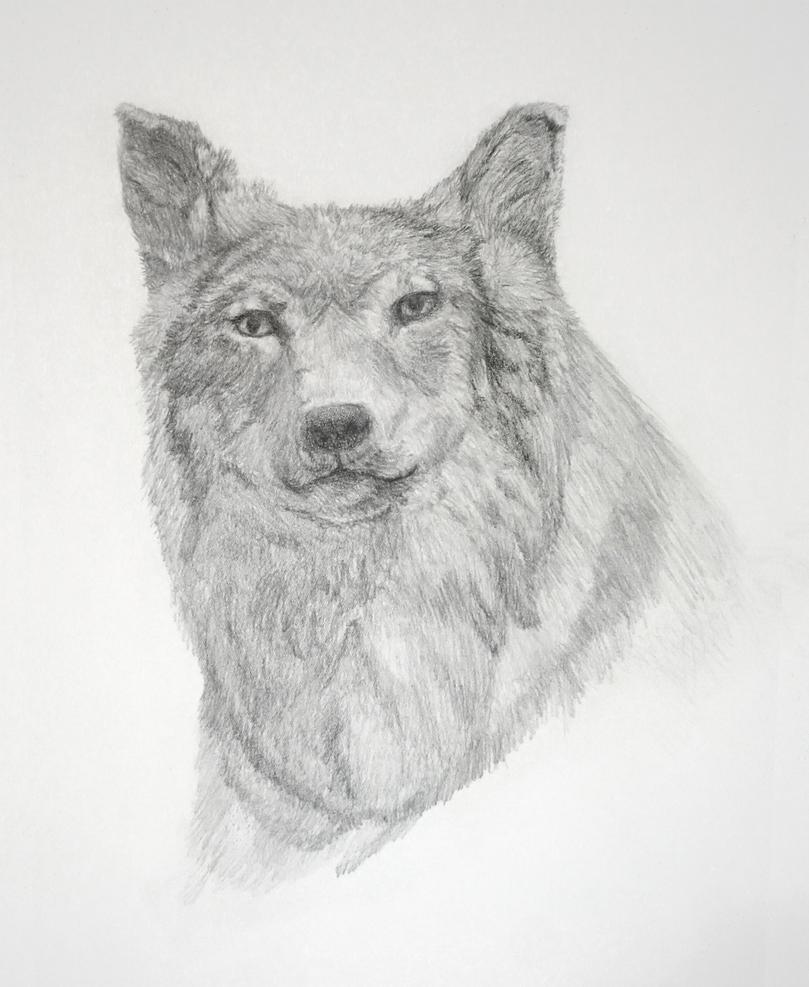 Wolf drawing by fayeana