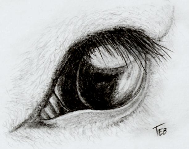 Horse Eye by Stingray-24