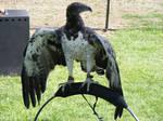 Bird of Prey3