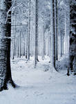 Snow Forest by MDFS