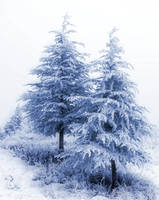 Snow Trees 3 Background by Mrs-Dani-Filth-Stock