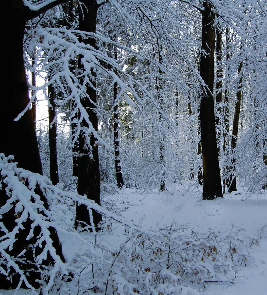 Snowscene Background2 by Mrs-Dani-Filth-Stock