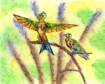Emerald-Crested Brilliants