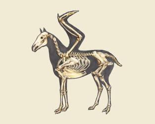 Equavus - Skeleton by Ara-Tun