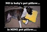 my pet pillow