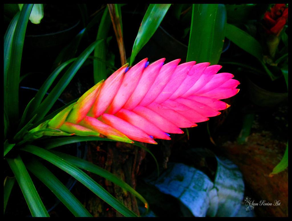Floral braid by SaraPereiraArt