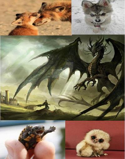Favorite Animals by Animebaby1223