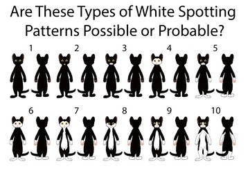 Possible Unusual White Spotting Patterns by MrBig2