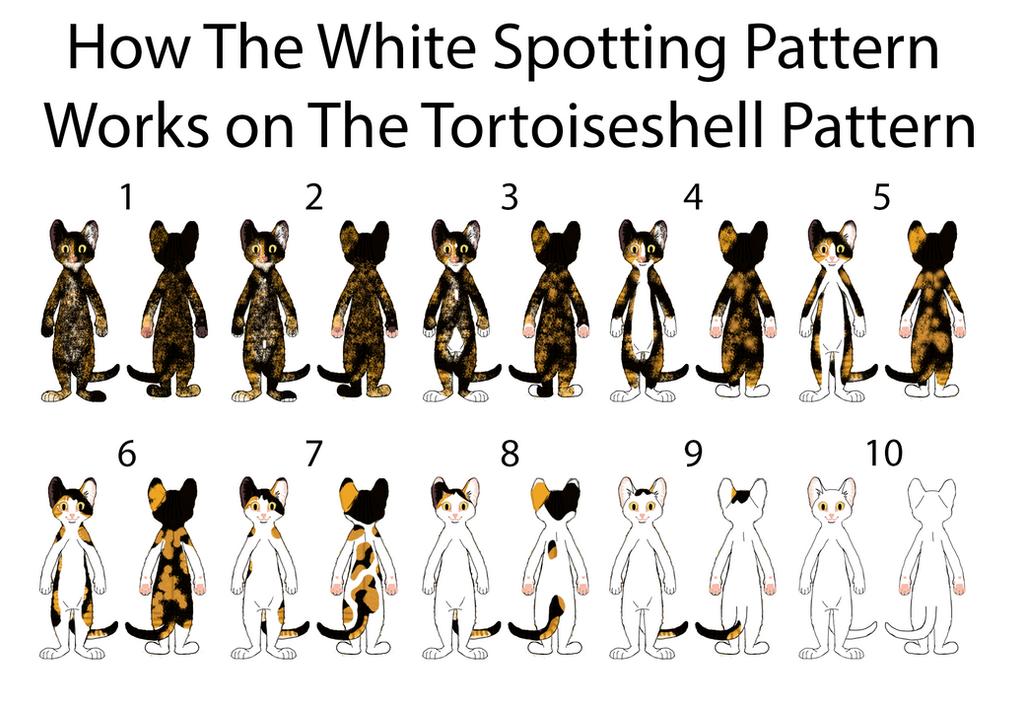 White Spotting on Black Tortie Pattern by MrBig2