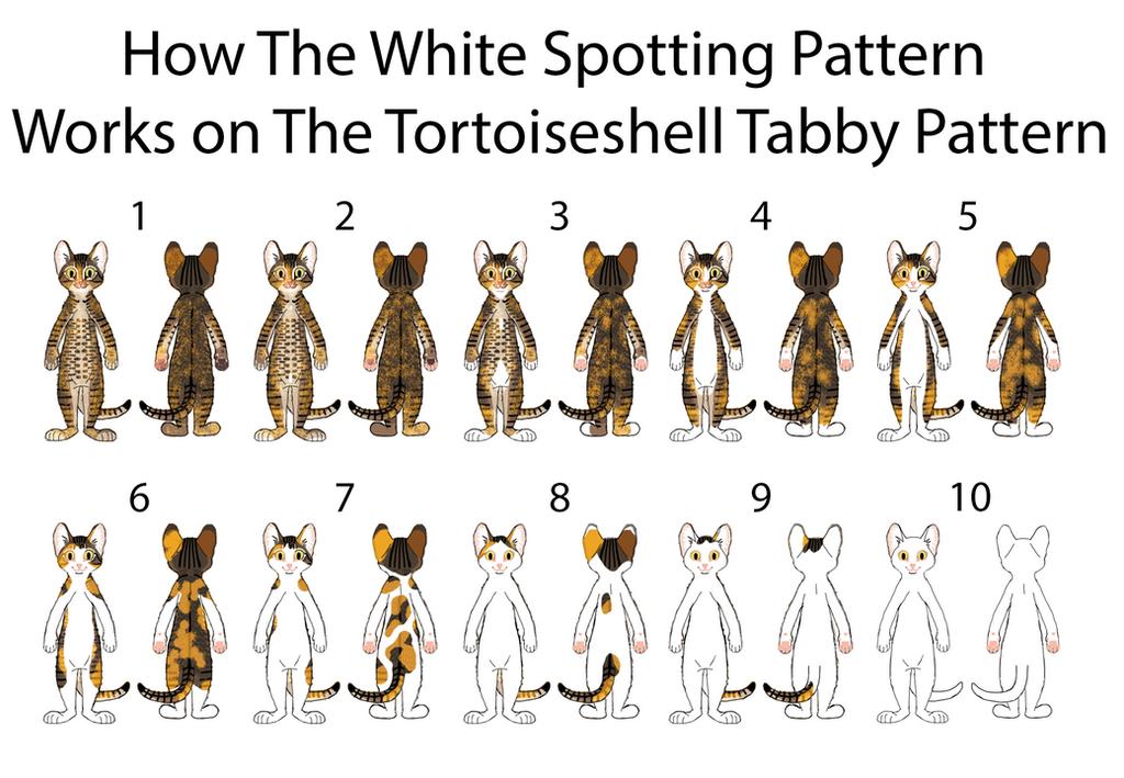White Spotting on Brown Torbie Pattern by MrBig2