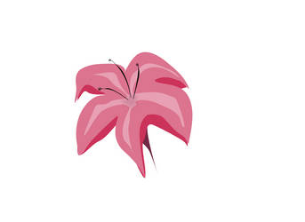 the Five Pink Flower