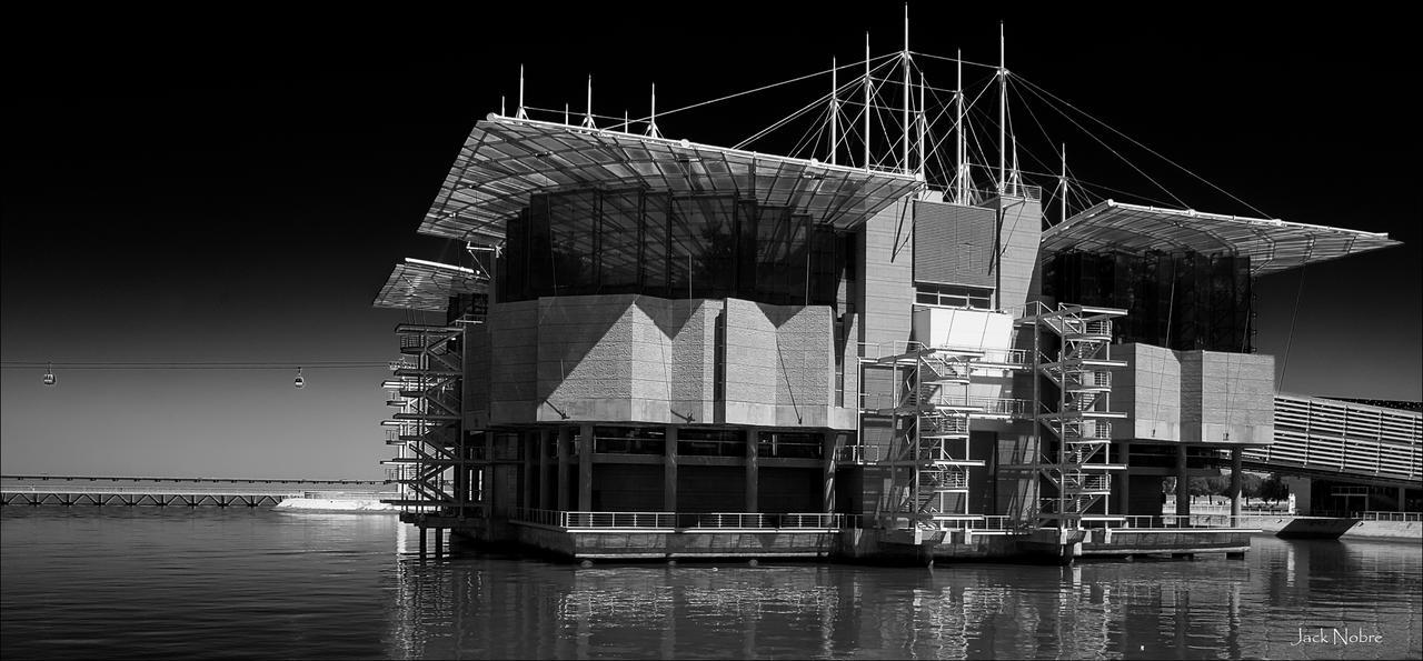 Lisbon Oceanarium by Jack-Nobre