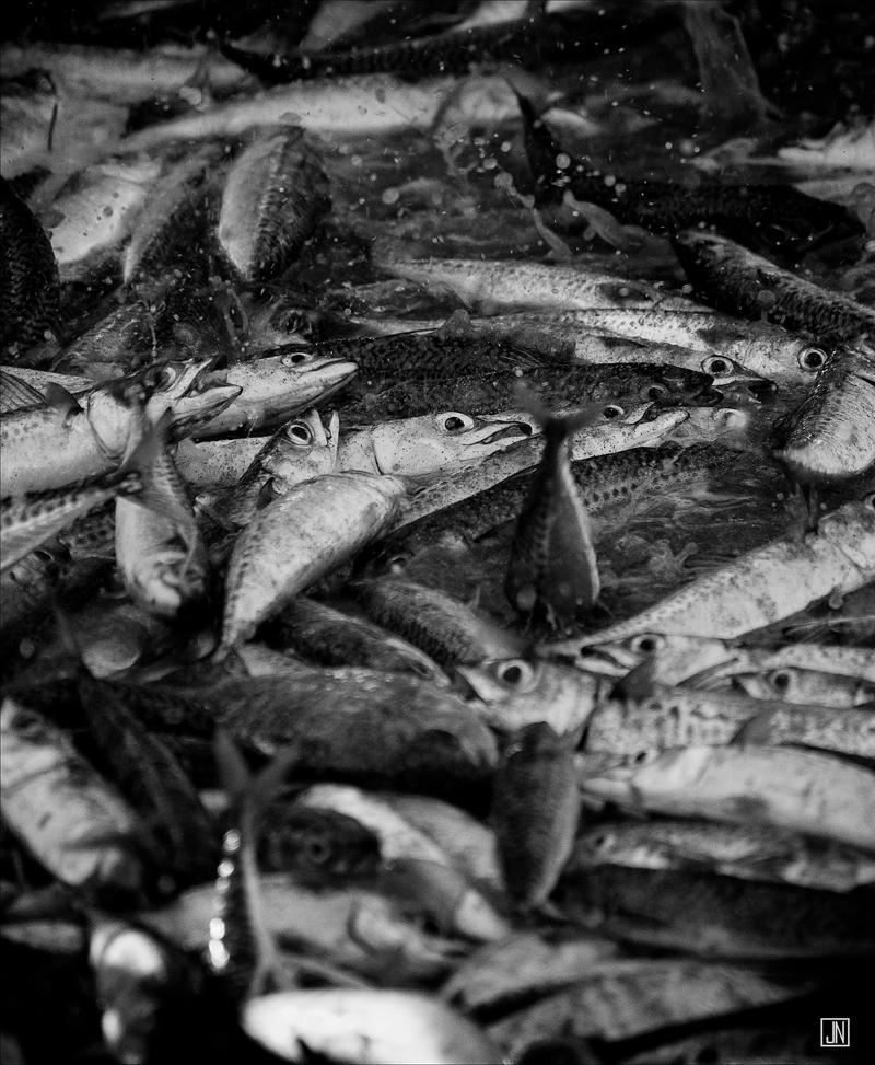 Fresh Fish by Jack-Nobre