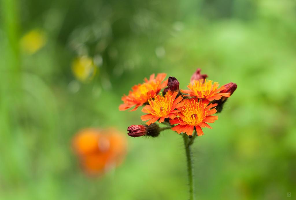 Orange Delights by Jack-Nobre