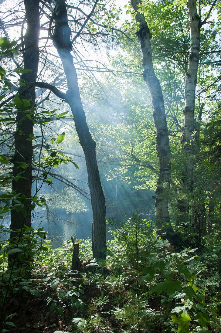 Smoke through trees by Jack-Nobre