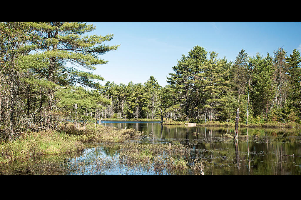 My Pond by Jack-Nobre