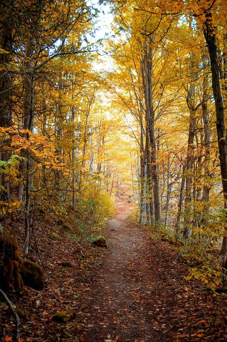 Golden Forest Light by Jack-Nobre